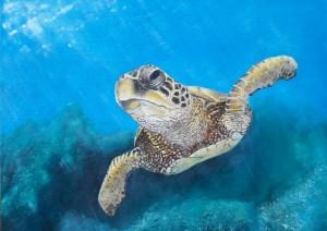 1-schildpadje-1-mobiel-gewoon-gecompr