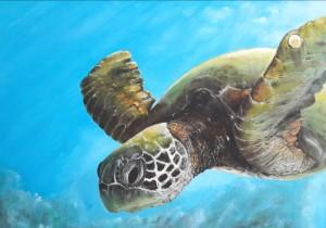 2-schildpadje-2-hdr-mobiel-gecompr