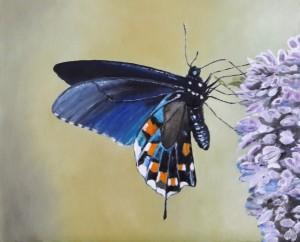 3-vlinder1-gecompr