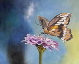 4-vlinder2-gecompr